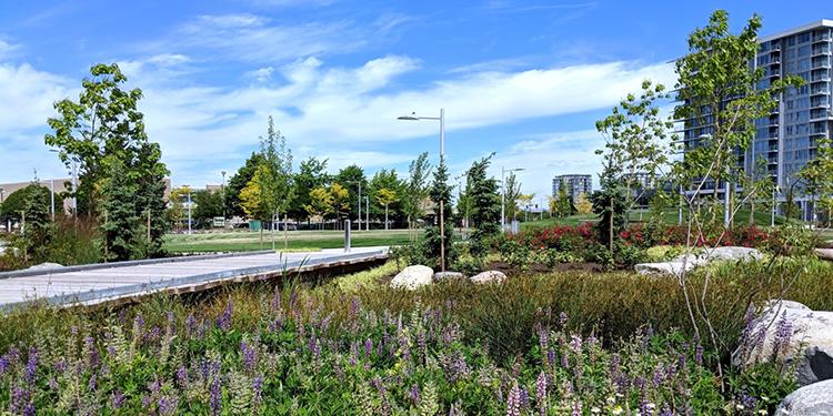 Moana inaugurates Richmond's newest park