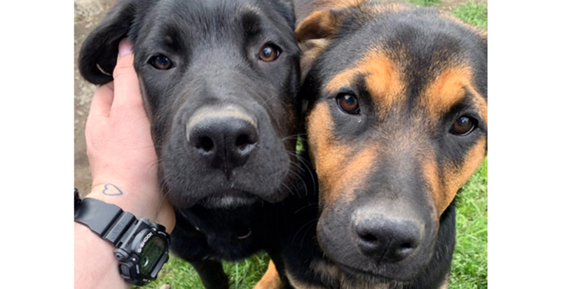 Abandoned pups have tail-wagging happy ending