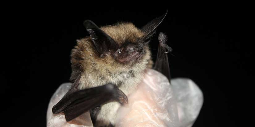 City of Richmond becomes Metro Vancouver's first certified bat friendly community