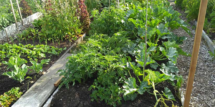 Gardeners harvest wealth of experience